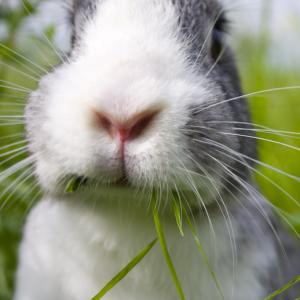 Doneren voor konijnen in het asiel