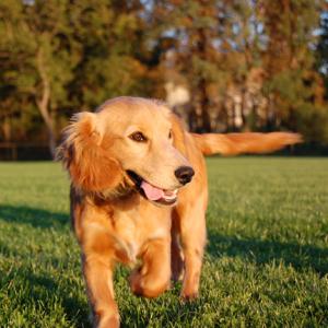 Donatie voor hondenvoer voor dierenasiels