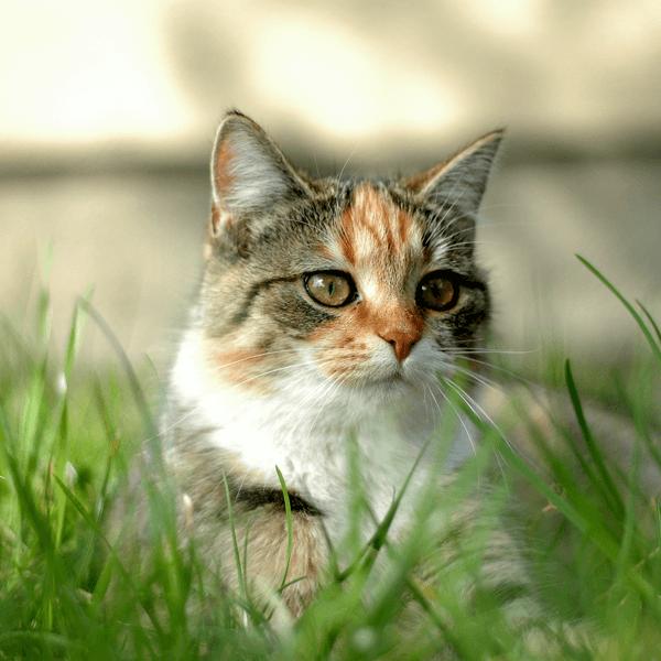 Steun Flappus met een donatie voor kattenvoer