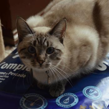 Donatie kattenvoer voor katten opvang