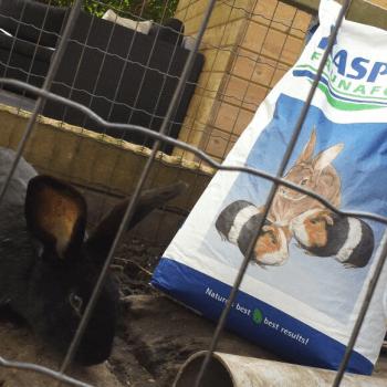 Donatie konijnenvoer stichting Flappus Zwolle