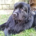 donatie-voor-opvang-hond