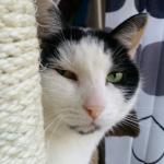krabpaal-donatie-voor-katten