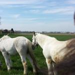 donaties-voor-oude-paarden