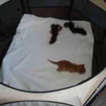 doneren-voor-kittens