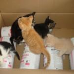 asiel-kittens-donatie