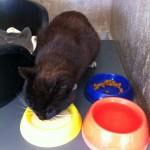 donatie-kattenmelk-asieldieren