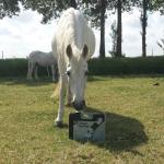 donatie-oude-paarden