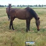 doneren-voor-oude-paarden