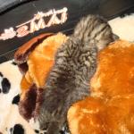 donatie-voor-kittens