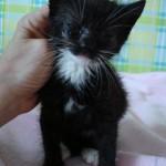 kitten-donatie