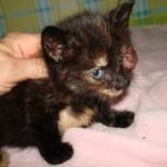 kittens-asiel-doneren