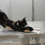 doneren-voor-katten