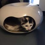 donatie-voor-asiel-katten