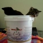 doneren-asiel-kittens