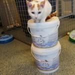 doneren-kittens