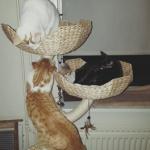 donatie-kittens