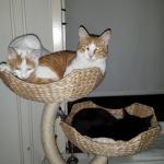 katten-goed-doel