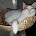 kittens-doneren