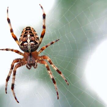 muggen mieren spinnen muizen ratten slakken rouwvarenmugjes fruitvliegjes vliegen zilvervisjes diervriendelijk verjagen