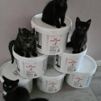 Kittenparadijs